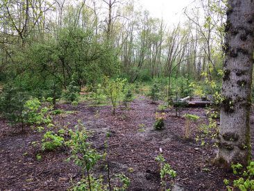 At the end of Earth Day celebrations at Everett Crowley Park, another corner of the park had been reclaimed from invasive blackberries and replaced by native plants and shrubs.
