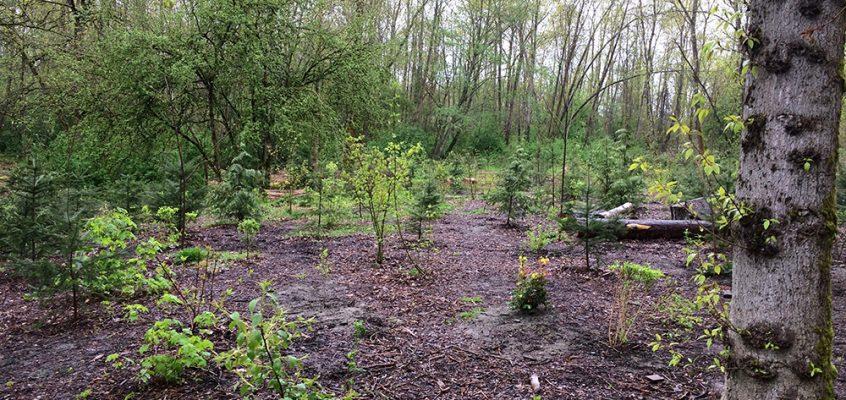 Champlain Heights Community Garden