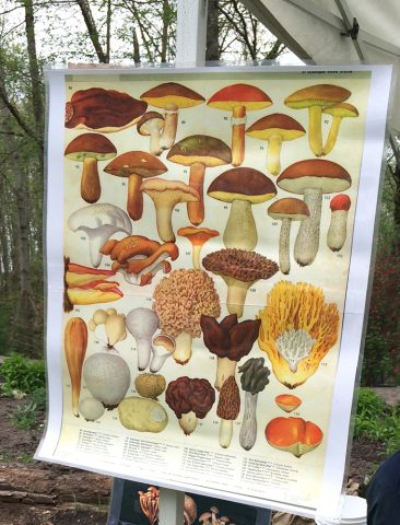 The Vancouver Mycology Society was at Earth Day planting mushrooms and fungi in Everett Crowley Park.